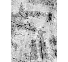 Bare trees branches 5 Photographic Print