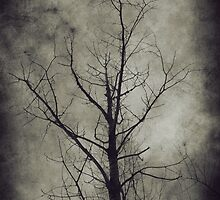 Dark trees 4 by AnnArtshock