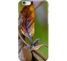 New Beauty from Frost iPhone Case/Skin