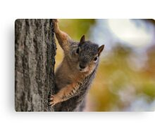 Are you sure you're out of peanuts? Canvas Print