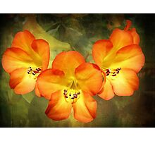 Three Hawaiian Beauties Photographic Print