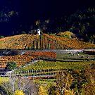 Vineyards Les Crêtes  by annalisa bianchetti
