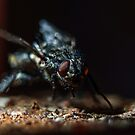 The fly by Mark Williams