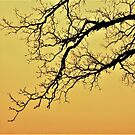 Tree Branch in Fog by Graphxpro