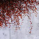 wall of tears by Ingrid Beddoes