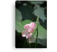 Pastels - Lotus bud Canvas Print
