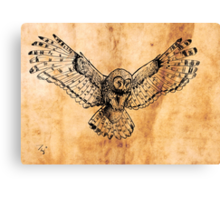 Flying owl digital illustration on old paper texture Canvas Print