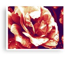 Red rose at the morning with water drops Canvas Print