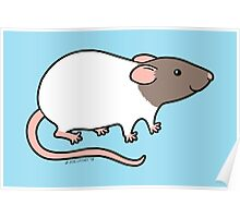 Friendly Hooded Rat - Grey and White Poster