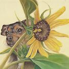 Pup with Sunflower by Pam Humbargar