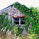 Another Old Irish Barn, Donegal, Ireland by Shulie1