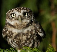 Whoooo are you looking at? by ChrisMillsPhoto