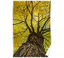 Under the Yellow Canopy Poster