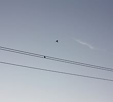 Two Birds on a Telephone Wire by JupiterHadley