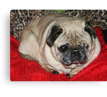 Pug Ball Canvas Print