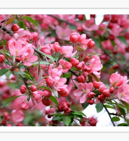 Spring blossom tree background Sticker