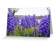 An ocean of Grape Hyacinth Greeting Card