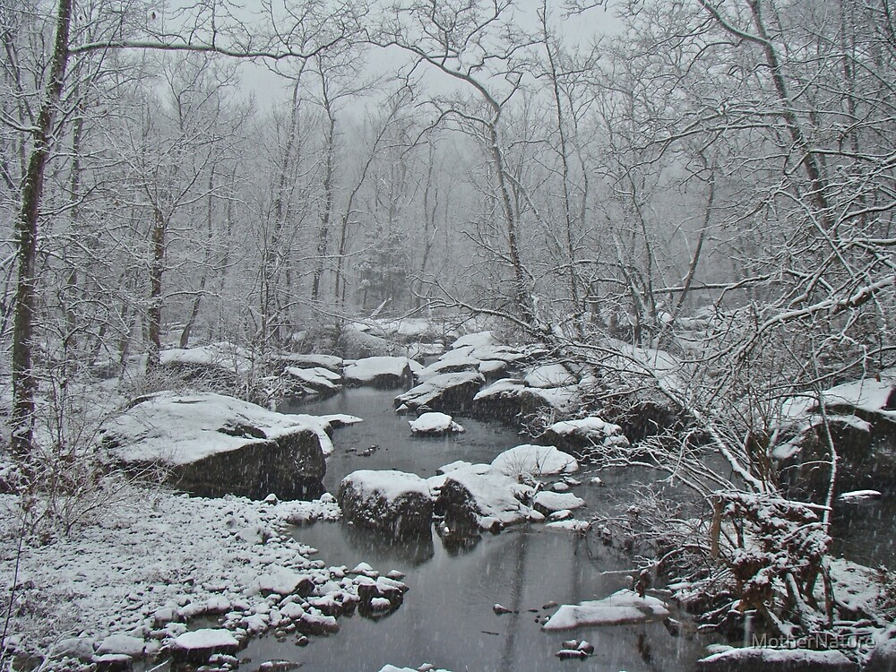 Dressed in White For Winter's First Snow by MotherNature