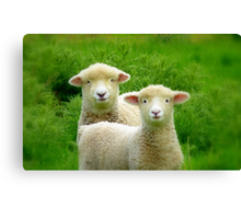 The Red Bubble Definition of Cute! - Lambs - NZ Canvas Print
