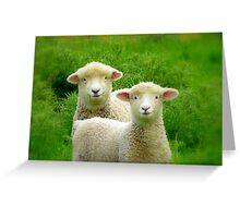 The Red Bubble Definition of Cute! - Lambs - NZ Greeting Card