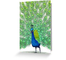 Colorful Peacock Painting Art Greeting Card
