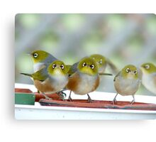 Excuse Me Waiter... But...Where Is The Main Course? - Silver-Eyes - NZ Metal Print