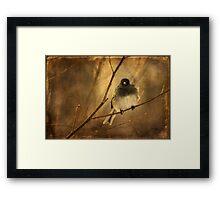 Backlit Birdie Being Buffeted Framed Print
