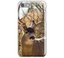 New Mexico Mule Deer Buck iPhone Case/Skin