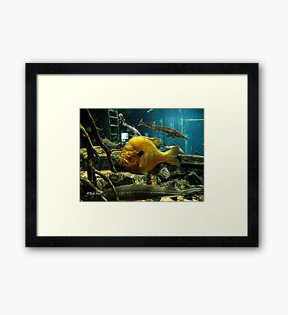 """May Not be a Trophy Large Mouth Bass, BUT I GOT YOUR ATTENTION!""... prints and products Framed Print"