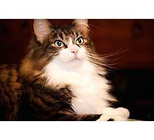 """Peanut"" Tabby Cat  Photographic Print"
