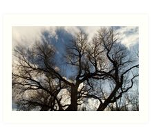 Creepy Cottonwood Art Print