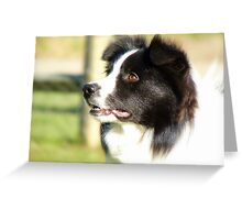 At Your Command I'm Ready For Outrun! - Border Collie - NZ Greeting Card
