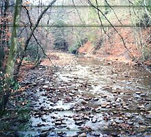 Monongahela National Forest Cherry River by Cleave
