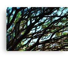 Dragons Blood Tree 2  Canvas Print
