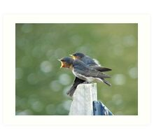 Me..ME...MEEE.... First!!! - Welcome Swallows - NZ Art Print