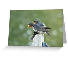 Me..ME...MEEE.... First!!! - Welcome Swallows - NZ Greeting Card