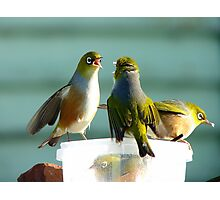 I SAID!!.. Junior's Had Enough Time-Out!!!... Wax-Eyes - NZ  Photographic Print