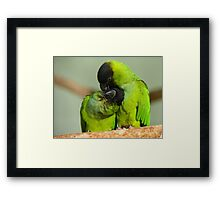 This Is Simply Heavenly!!! - Nandae Conures - NZ Queenspark Framed Print