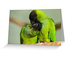 This Is Simply Heavenly!!! - Nandae Conures - NZ Queenspark Greeting Card