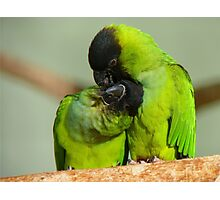 This Is Simply Heavenly!!! - Nandae Conures - NZ Queenspark Photographic Print
