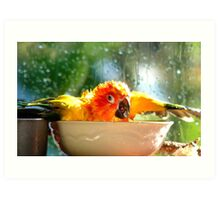 I'm Singing In The Rain..!!! - Sun Conure - NZ Art Print