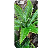Prehistoric Ferns iPhone Case/Skin