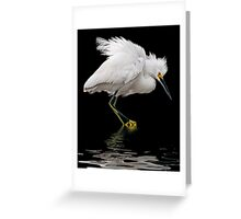 All Fluffed Up Greeting Card