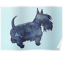 Scottie watercolour (blue) Poster