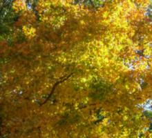 Brilliant Colors in Kingsland Pointe Park, Sleepy Hollow NY Sticker