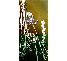 Mornington Peninsula Grasslands 6 Photographic Print