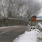 Robin Christmas by Samuel Rollings