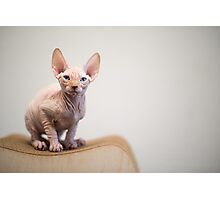 Sphynx Cat Blue Eyes Photographic Print