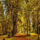 Woodland Pathway by Trevor Kersley
