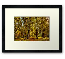 Woodland Pathway Framed Print